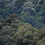 ตามหานกเงือก ในป่าปลายขวานทอง